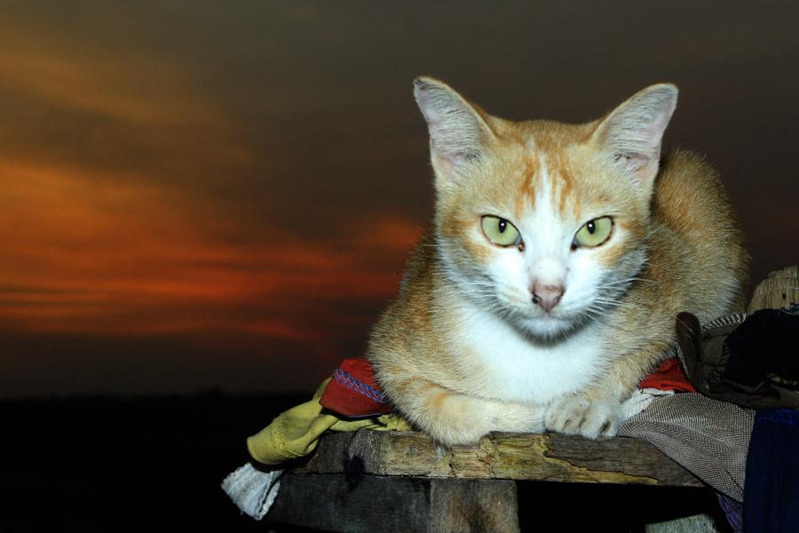 by Kanda Ridho - Animals - Cats Portraits