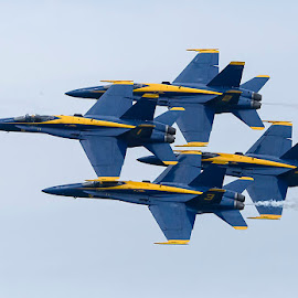 Blue Angels by Wade Grassedonio - Transportation Airplanes ( jets, blues, fighter jets, f 18, blue angels )