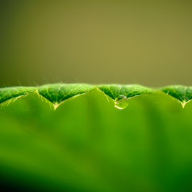 Side On by Darrell Evans - Nature Up Close Leaves & Grasses ( water, plant, waterdrop, flora, drop, green, leaf, close-up, macro, flowers & plants, liquid, nature, fluid, droplet, no people, outdoor, wet, garden )