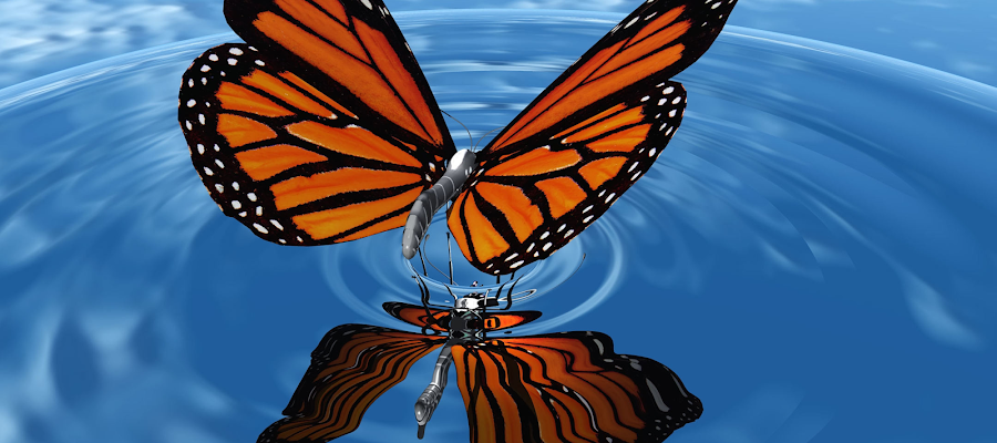 Monarch Butterfly over water