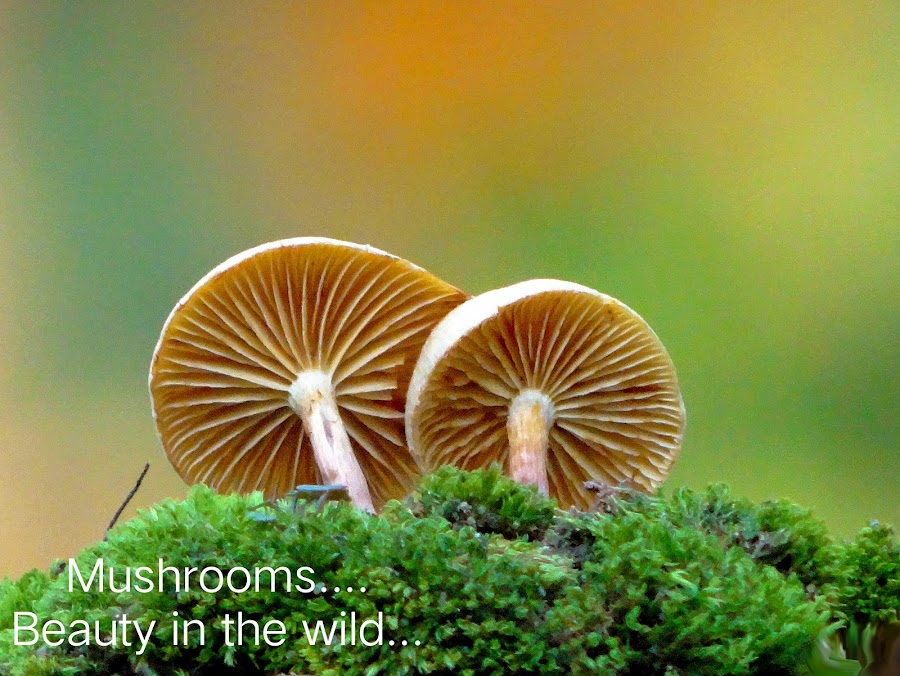 Mushrooms...  by Asif Bora - Typography Quotes & Sentences