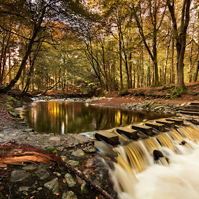 The Stepping Stones. by Brens Photo's - Landscapes Forests ( water, colour, color, fall, forest, co down, river, stepping stones )