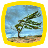 Wind Sounds APK Icon