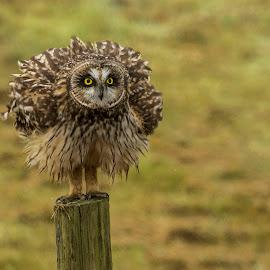 by P Murphy - Animals Birds (  )