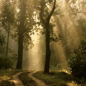 First Sunlight  by Sudipta Mukhopadhyay - Novices Only Landscapes ( first sunlight at kanha forest )