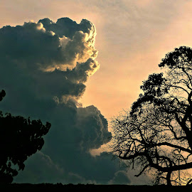 Cloud vs Tree by Gina Jordan Morrison - Novices Only Landscapes