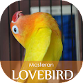 Free Masteran Lovebird Ngekek APK for Windows 8