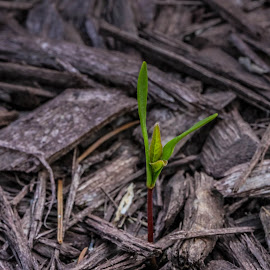earth day by Sunil Pawar - Nature Up Close Leaves & Grasses ( plant, green, beautiful, white, beauty, travel, new, life, season, background, day, earth, light, natural, hope )