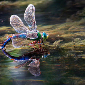 Laying eggs by Matej Skubic - Animals Insects & Spiders