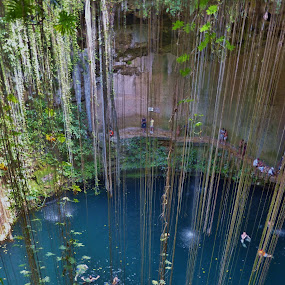 Yucatan Cenote by Leigh Thomson - Landscapes Caves & Formations ( nature, vines, mexico, cenote, blue water, travel, yucatan, cave, waterhole )