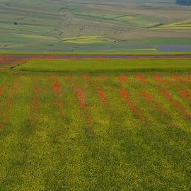Castelluccio 1 by Bruno Brunetti - Landscapes Prairies, Meadows & Fields ( colors, norcia, flowers, castelluccio, fields,  )