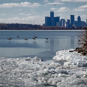 Detroit Skyline with birds by Chris Mowers - City,  Street & Park  Skylines ( detroit river, ice, detroit, frozen river, birds )