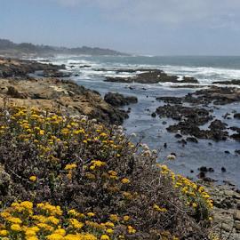 Bean Hollow State beach by Kathy Dee - Landscapes Travel ( blue sky, clouds, water, sea, coast, wildflowers, rocks, ocean, beach, california, bay, state, bean hollow, day, coastal, park )