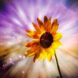 ---------Cosmic Sunflower------- by Neal Hatcher - Digital Art Things