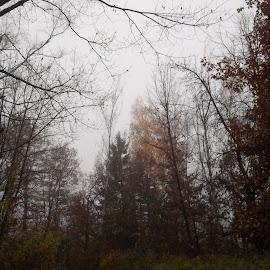 Есен by Georgi Kolev - Novices Only Landscapes ( есен., мъгла., време., тишина., дървета. )