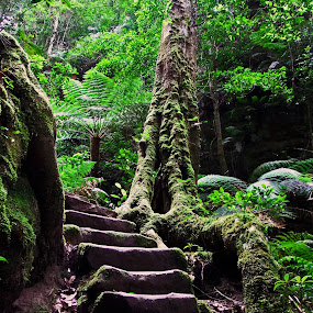 Stairway by Mike Mills - Nature Up Close Trees & Bushes ( stairs, nature, tree, bush, blue mountains )