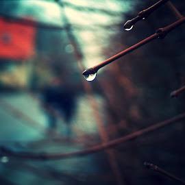 Drop  by Masood Tirbespî - Nature Up Close Water ( reflection, winter, drop, dew drops, rain )