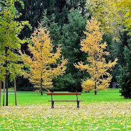 Kanenfeld park by Radisa Miljkovic - City,  Street & Park  City Parks