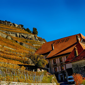 House in the vineyard by Radu Eftimie - Landscapes Mountains & Hills ( hill, vineyard, switzerland, house )