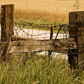 Country Summer by Wally VanSlyke - Landscapes Prairies, Meadows & Fields ( farm, indiana, fence, midwest, fence post, barb wire, country )