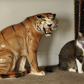 Copy Cat by Robert Golub - Animals - Cats Playing
