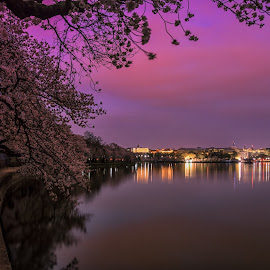 Tidal Basin at Night by Carol Ward - City,  Street & Park  Night ( washington, reflection, skyline, cherry trees, night, washington dc, tidal basin, cherry blossoms )