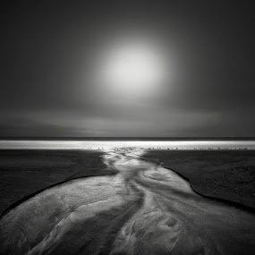Seagulls by Nathan Wirth - Landscapes Waterscapes ( drake's beach, marin county, nlwirth, california, point reyes national seashore, long exposure, yup, usa )