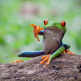 Hiii...I am Here.... by Vincent Sinaga - Animals Amphibians ( amazon frog, frog, amphibian, green frog, animal )