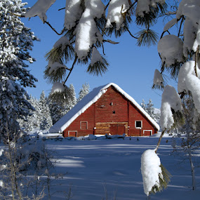 Red Barn through Tree by Logan Knowles - Buildings & Architecture Other Exteriors ( red, winter, barn, snow, landscape,  )