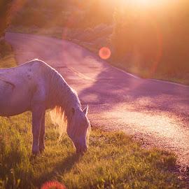 Lighted Horse by Dustin White - Animals Horses ( national park, sunset, horse, badlands )