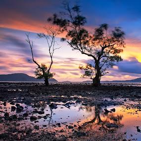 Two Tree by Arthit Somsakul - Nature Up Close Trees & Bushes ( two, tree, sunset, stone, beach, sunrise, reflex )