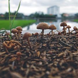 Mushrooms by Imam Sadli - Nature Up Close Mushrooms & Fungi ( mushroom, rice, fungi )