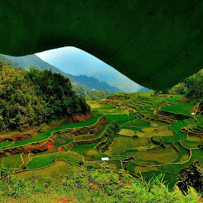 Lush Green by Wilbert Quebral - Landscapes Mountains & Hills ( banana, rice, leaf, terraces )