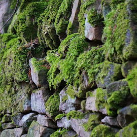 Moss Rock by Andy Walker - Nature Up Close Rock & Stone ( nature, moss, rock, drystone, wall )