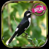 Free Download canto de bigodinho offline APK for Samsung