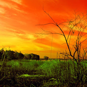 orange sky by Joseph Basukarno - Landscapes Sunsets & Sunrises ( ir, sunset, infra red, digital imaging, landscape )