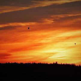 Orange Sunset by Lavonne Ripley - Landscapes Sunsets & Sunrises