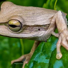 by Rogerio Ribas - Animals Amphibians