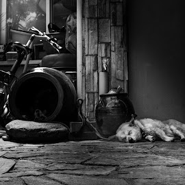 Sleeping by Varok Saurfang - Black & White Street & Candid ( home, black and white, sleeping, dog, evening, bicycle )