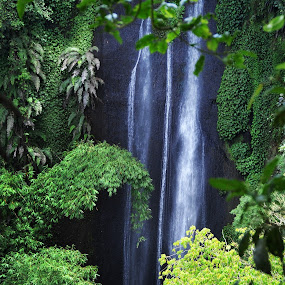 waterfall framing by Jenni Ertanto - Landscapes Waterscapes ( framing, nature, tree, waterfall, landscape )