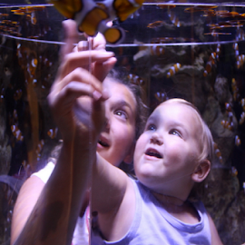 Inside the fish tank ...  by Desiree Havenga - People Street & Candids (  )