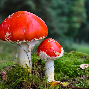 by Irena Gedgaudiene - Nature Up Close Mushrooms & Fungi