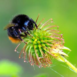 Busy bee  by Mark  Harris - Abstract Macro
