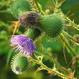 by Gerard Hildebrandt - Nature Up Close Other plants