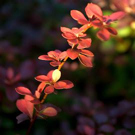 by Dan Doran - Nature Up Close Leaves & Grasses