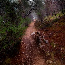 Sendero by Victor Sarabia Grau - Nature Up Close Trees & Bushes ( green, verde, nikon, montaña, montain )