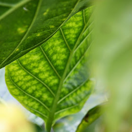 Tropical Leaves by Karen Coston - Nature Up Close Leaves & Grasses ( look between, maui, green, tropical plants, hawaii )