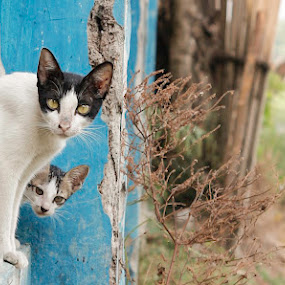 miaawww by Bhako N Bhako - Animals - Cats Portraits