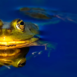 by Stanley P. - Animals Amphibians