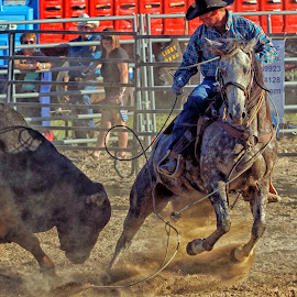 I'm Out of Here! by Twin Wranglers Baker - Sports & Fitness Rodeo/Bull Riding